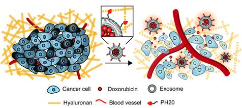 KIST finds nanomaterial that can break down cancer cell barrier
