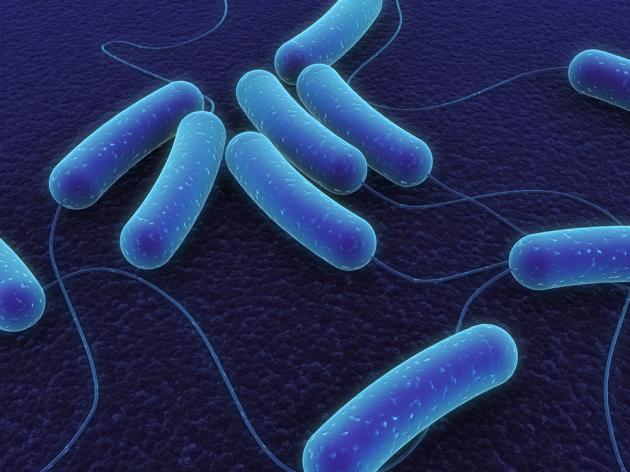 Korea, Italy to hold microbiome symposium in May