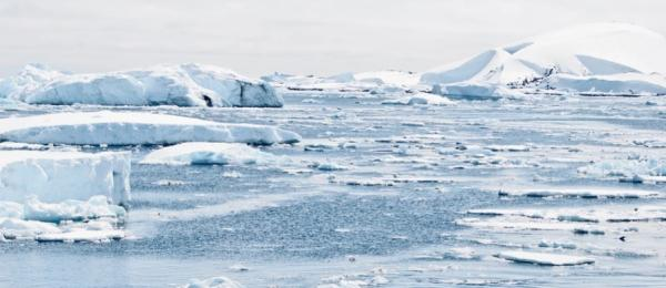 Antarctic sea microorganisms; a solution to blood shortage?