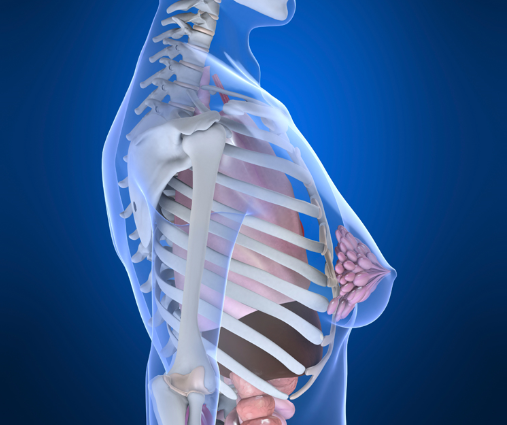 Joint R&D program to test Keytruda combo in breast cancer