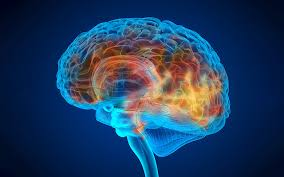 IBS identifies brain drainage pathway that induces dementia