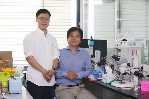 Korea-US researchers find brain neurons that control blood glucose levels