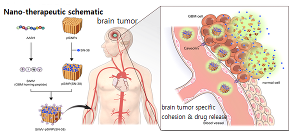 Researchers develop nanotherapy targeting brain tumor